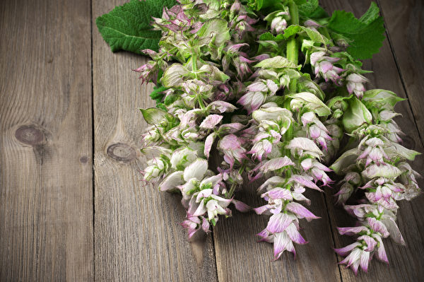俗称快乐鼠尾草,将鼠尾草绑成一束点燃,便能驱除负能量。(Svetlana Lukienko/Shutterstock)