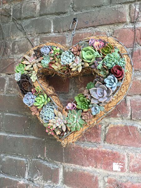 组盆成心型的多肉植物,富有生命力又浪漫,是送给情人的最好礼物。(曾维中提供)