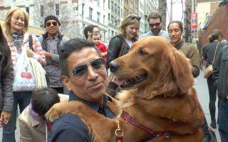 """纽约金毛犬给路人""""爱的抱抱"""" 无法拒绝"""