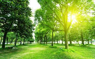 樹木吃葷還是吃素? 專家:視情況而定