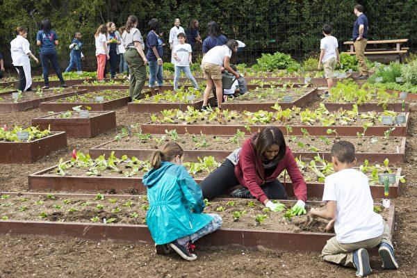 美国第一夫人宣布继续经营白宫菜园