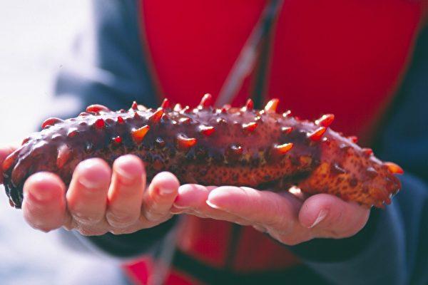 卑詩野生紅海參入選可持續性海鮮
