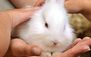 小狗指引路人救兔子朋友