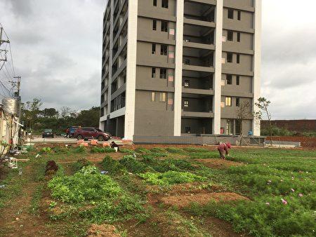 透過「社區協力農場」,建造一個「里仁為美」的友善社區。(吉富春提供)