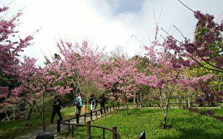阿里山花季 邀您赏花绽、寻音踪