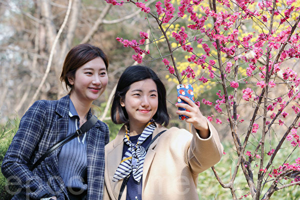 组图:韩国首尔 百花绽放春意盎然