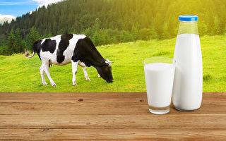 """新州奶農遊說團體Dairy Connect表示,""""奶""""的定義在食品標準中是指乳動物的乳腺分泌物,比如牛奶。(Fotolia)"""