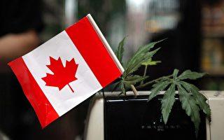 加拿大大麻合法在即 華人憂心孩子沾染