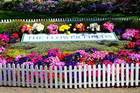 闻名遐迩的卡尔斯堡花田Carlsbad Flower Fields每年的3到5月就会变成一片花海,图为花田的标志。(李旭生/大纪元)