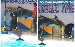 印尼马戏团海豚遭晾晒 2.5万人签名声援