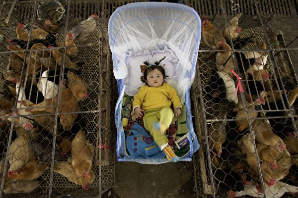 H7N9在中国突然扩散 美国疾控中心担忧