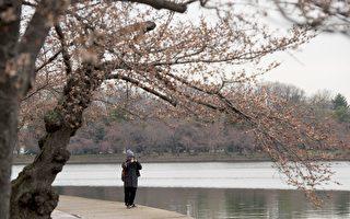 尽管寒冷还在有些人身边流连,但是春分于周一(3月20日)正式降临。(SAUL LOEB/AFP/Getty Images)