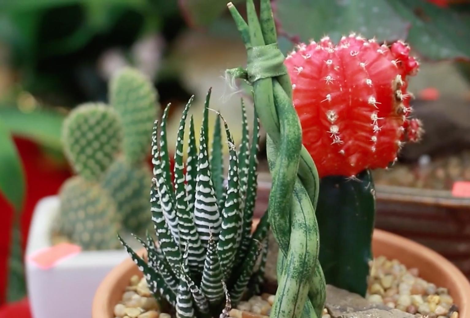 室内植物养护方法