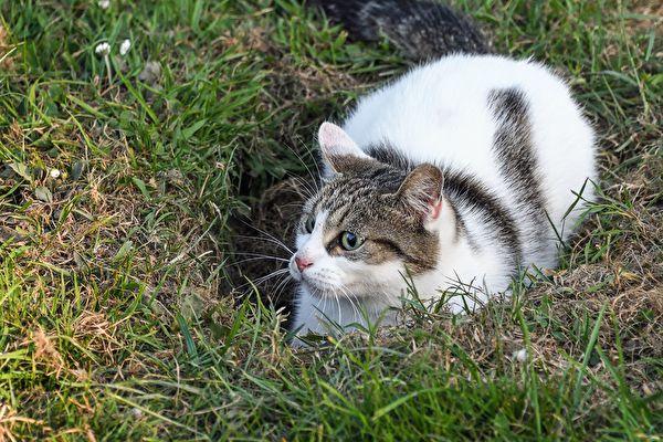 组图:日本流浪猫钻地洞 玩得不亦乐乎