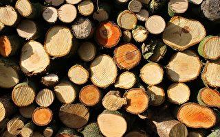澳洲最大硬木加工廠關閉 維州百人失業