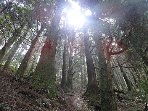 陽光從樹梢灑落的光影。(曾晏均/大紀元)
