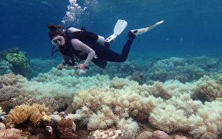 大堡礁连两年白化 完全没机会复育