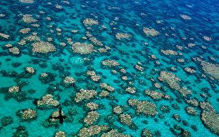 澳洲科學家:海洋升溫對大堡礁影響巨大