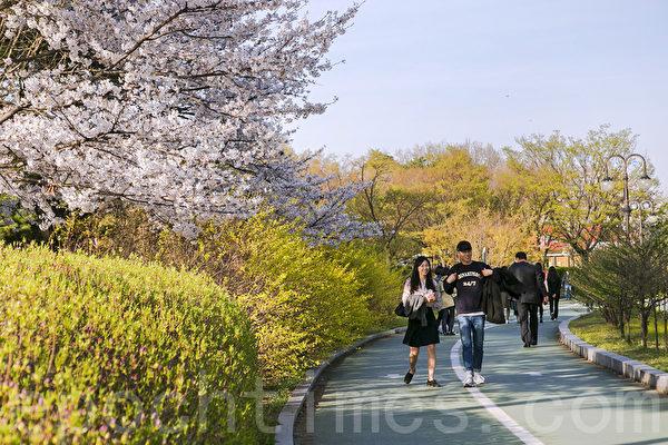 组图:汝矣岛公园繁花似锦 首尔踏青好去处