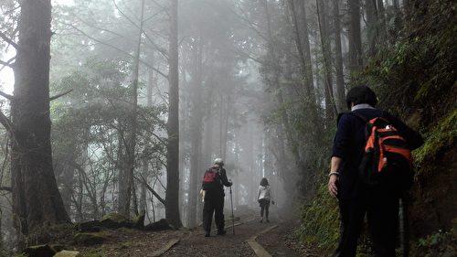 古道內霧氣漸濃。(曾晏均/大紀元)