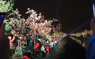 行旅罗东新书发表 罗庄樱花步道 赏夜樱趣