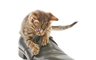 10個最受歡迎英國鞋履品牌+商家優惠跟蹤