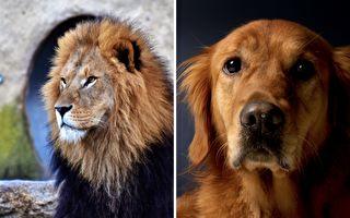 暖心廣告:如果我變成獅子王 你會喜歡我嗎?