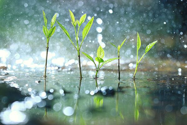 谷雨是春天的最后一个节气。此时雨量变大,最利谷物生长。(Kichigin/Shutterstock)