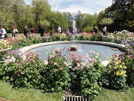 美麗的Fan Columbine環繞著園噴泉 (Round Fountain)(司瑞/大紀元)