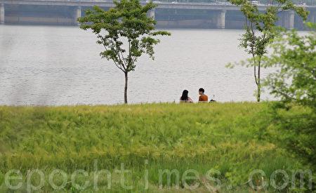 五月中旬的韓國首爾漢江公園(二村洞地區)一望無際的青麥田。(全景林/大紀元)
