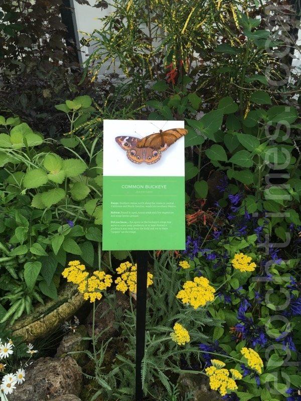 旧金山温室花房展出五百多只蝴蝶