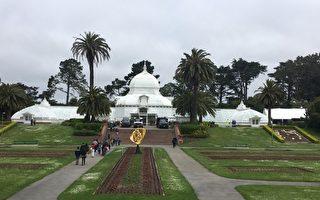 舊金山溫室花房展出五百多隻蝴蝶