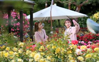 组图:首尔大公园 玫瑰花浪漫盛开