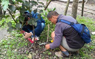 罗东林管处树艺研习班  提升专业树木健康管理