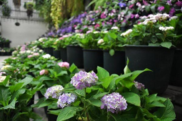 """""""花鸟园""""里美丽的花朵。(新竹县政府提供)"""