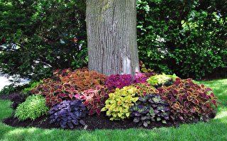 庭院:如何打造花园背阴区