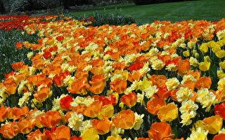 宾州长木花园的春天(下)