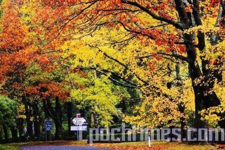 澳大利亚墨尔本丹迪农山麓秋天的动人景色。(大纪元)