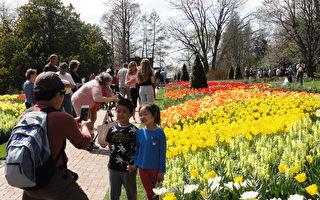 宾州长木花园的春天(上)