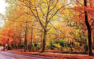 澳洲最适合踏秋而歌的五佳旅游地
