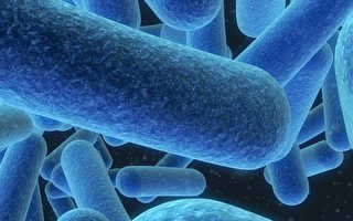 """肥胖、忧郁、炎症 取决于""""细菌器官""""?"""