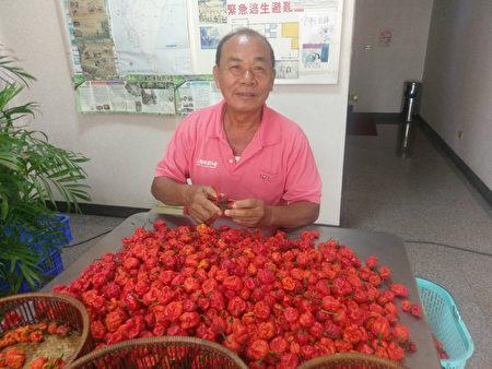 台农民爱辣成痴 种植世界知名辣椒成达人