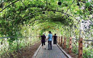 龙昇金瓜艺术季 体验金瓜美食