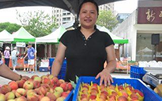 五峰鄉甜桃成熟了 新瓦屋綠市集很熱鬧