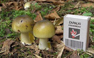 吃了一種野生蘑菇 加州三人需要肝移植