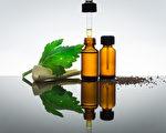 芹菜籽精油 有效驅趕埃及斑蚊