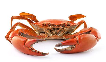 螃蟹(Fotolia)