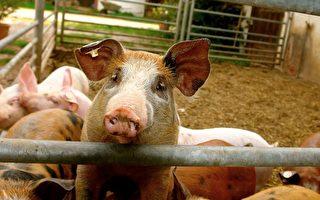 狗和猪是好朋友 有一天狗掉进井里 猪急忙找来一根绳子…