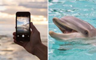 美國女子手機掉海裡 海豚竟幫她叼回來
