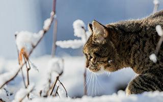 俄罗斯流浪猫寒冬中救弃婴